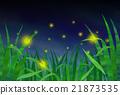 螢火蟲 日本的螢火蟲 昆蟲 21873535