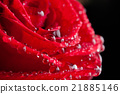 Red roses and waterdrops 21885146