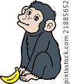 침팬지, 벡터, 야생 21885652