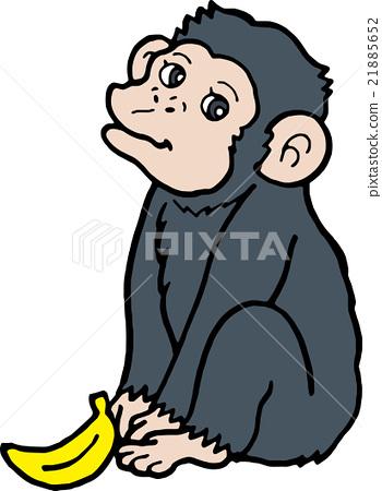 沒有背景的野生動物黑猩猩 21885652