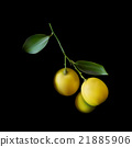 Yellow lemons with branch on  black background. 21885906