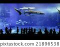美麗海水族館 鯨鯊 自然 21896538