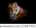 Tiger 21897455