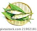 香魚 魚 野生香魚 21902181