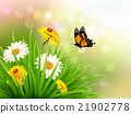 Nature summer daisy flowers with butterfly. 21902778