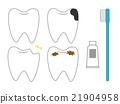 teeth, tooth, toothbrush 21904958