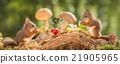young squirrels meet 21905965