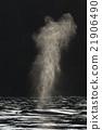 座頭鯨 吹頭髮 火山氣 21906490