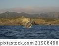 波浪 父島 座頭鯨 21906496