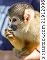 다람쥐 21912096