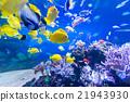 aquarium 21943930