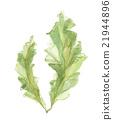 sea lettuce, aquarelle, water color 21944896