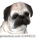 巴哥狗 巴哥 哈巴狗 21949231