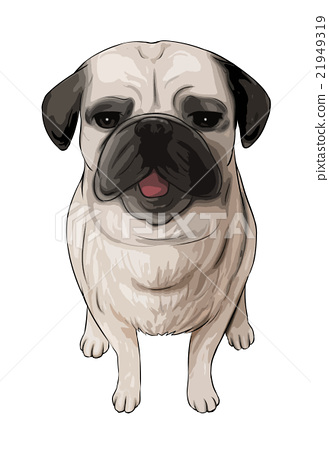 Illustration of a sitting pug (cut out processing) 21949319