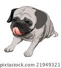 哈巴狗 狗 狗狗 21949321