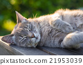 Cat lying on bench in backlight at sunset 21953039
