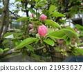 Karin桃紅色花在秋天投入黃色果子 21953627