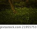 firefly 21955753