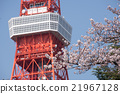 Sakura and Tokyo Tower Observation Deck 21967128
