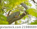 lizzard on the tree 21986689