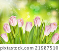 Beautiful pink tulip. EPS 10 21987510