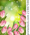 Pink colored tulips. EPS 10 21987566