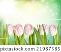 Beautiful tulips background. EPS 10 21987585