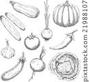 vegetable, sketch, vector 21988107