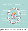 Baby tooth chart eruption record 21995157