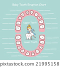 Baby tooth chart eruption record 21995158