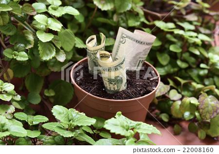 money plant 22008160