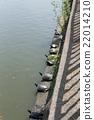 烏龜 日光浴 水邊 22014210