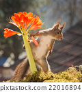 picking flowers 22016894