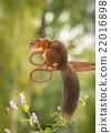 scissors squirrel 22016898