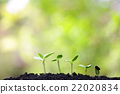 Sunflower planting 22020834