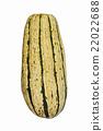 Delicata squash 22022688