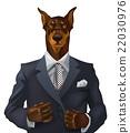 doberman, dog, wear 22030976