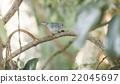 Blue Bird 22045697