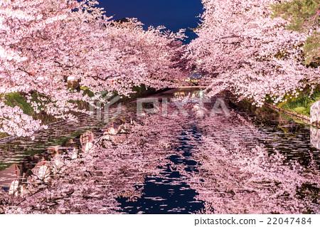 히로사키 공원의 벚꽃 소토 보리 22047484