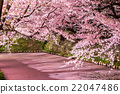 hirosaki, park, flower 22047486