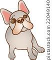 法國牛頭犬 狗 狗狗 22049140