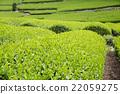 หญ้าอ่อน,หมวดธุรกิจ,อุตสาหกรรม 22059275