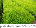 หญ้าอ่อน,หมวดธุรกิจ,อุตสาหกรรม 22059279