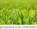 หญ้าอ่อน,หมวดธุรกิจ,อุตสาหกรรม 22059403
