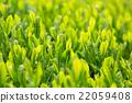 หญ้าอ่อน,หมวดธุรกิจ,อุตสาหกรรม 22059408