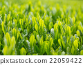 หญ้าอ่อน,หมวดธุรกิจ,อุตสาหกรรม 22059422