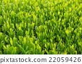 หญ้าอ่อน,หมวดธุรกิจ,อุตสาหกรรม 22059426