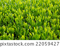 หญ้าอ่อน,หมวดธุรกิจ,อุตสาหกรรม 22059427