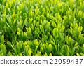 หญ้าอ่อน,หมวดธุรกิจ,อุตสาหกรรม 22059437