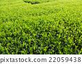 หญ้าอ่อน,หมวดธุรกิจ,อุตสาหกรรม 22059438